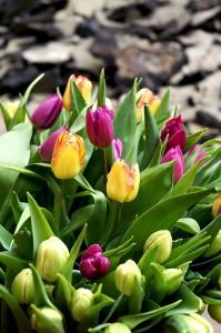 Frühling im Gaußhof